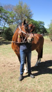 Horse Neck Stretches