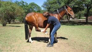 Horse Leg Stretches